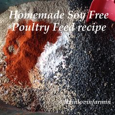 Homemade Poultry Feed | Chickens | Turkeys | livinlovinfarmin (.com)