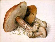 Beatrix Potter watercolor of mushrooms
