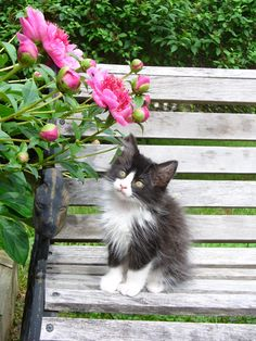 Tuffy Cat always takes time to smell the flowers
