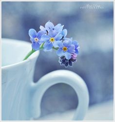 Pleasing Examples of Spring Photography for your Inspiration (21)