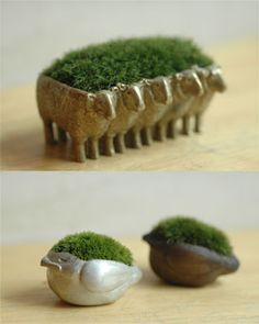 fancy chia pets/I want one or two!