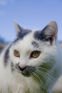 cat ~ Kiki