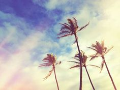 that onshore breeze