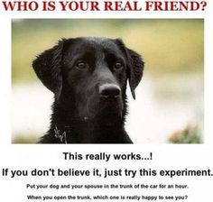 Who is your real friend???    More on:    http://igg.me/p/179226?a=901297  http://www.its-hilarious.com/  http://itunes.apple.com/us/app/funny-hilarious-jokes/id492166165?ls=1=8