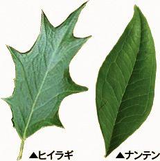 木の実験・観察研究室 葉脈しおりを作ろう |きこりんの森 Plant Leaves, Nature, Plants, Creative Crafts, Creativity, Naturaleza, Plant, Outdoors, Natural