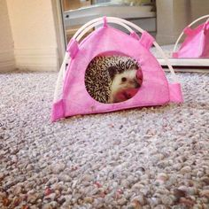Shhh! Don't tell anyone I'm hiding in my tent.