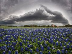 Jason Weingart's storm chasing –A shelf cloud over a field of bluebonnets in Round Rock, Texas Round Rock Texas, Indian Paintbrush, Family Vacation Destinations, Family Vacations, Cruise Vacation, Disney Cruise, Family Travel, Vacation Ideas, Road Trip Essentials