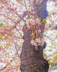 この時期の色味もいい感じ() #春 #空 #花 #桜 #葉桜 #ダレカニミセタイソラ #写真好きな人と繋がりたい #写真撮ってる人と繋がりたい #photo #japan #landscape #日本 #風景 #instagram #igers #igersjp #nature #flower #flowers #cherryblossoms #flowerstagram #floweroftheday #floralphoto #floralphotograph #naturelovers #pink #green #photooftheday #instasky #instagood