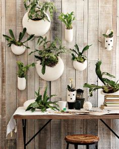 Hanging Pot Plants -- Shane Powers ceramic wall planters, West Elm USA, westelm.com