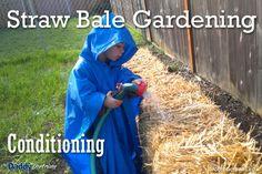 Straw Bale Gardening: Part 2 – Conditioning