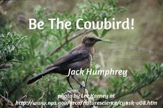 Be The Cowbird! / Jack Humphrey    / photo by Lee Karney at http://www.nps.gov/grca/naturescience/cynsk-v08.htm