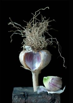 Garlic  © Lynn Karlin