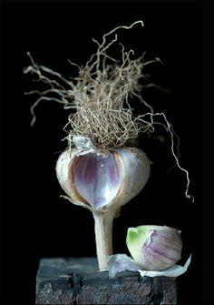 Garlic by Lynn Karlin