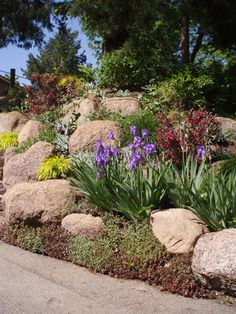 Retain a steep slope using boulder cropping, then secure the space in between with some showy shrubs and perennials.