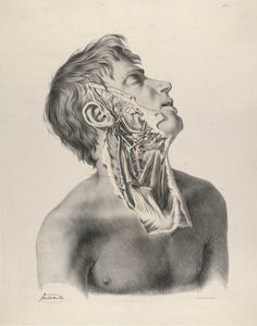 Richard Quain: The anatomy of the arteries of the human body, with its applications to pathology and operative surgery