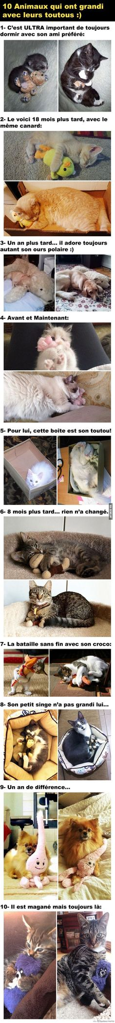 Des Animaux et leurs Jouets Animals growing up with their favorite toy. Cute Funny Animals, Funny Animal Pictures, Funny Cute, Funniest Animals, I Love Cats, Cool Cats, Animals And Pets, Baby Animals, Jurrassic Park