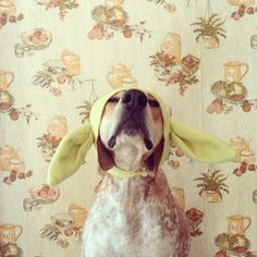 Maddie The Coonhound Tries On Halloween Costumes
