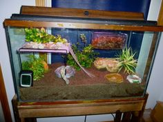 "(Pb) CrabbyPatti & Crabitat ♥ on Pinterest | @djohnisee ~ PIC: Nice Crabitat! ~ EXCEPT: substrate needs to be a minimum of 3x the height of tallest crab (usually min. 6"") 5:1 ratio of Play Sand & EE Coco Fiber ~~~ HINT: Rather than throwing away (landfill) ~ Please re-purpose the substrate (sand, etc), compost it or use to enrich your container/garden soil."
