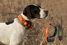 Garmin Astro Dog Tracking System - something I need to invest in shortly
