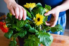 How to Care for Gerbera Daisies Inside | Home Guides | SF Gate