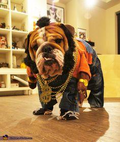 Mr T Doggie Dog - 2013 Halloween Costume Contest