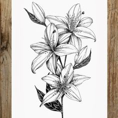 Steph Rostron ✒️ on Lilly Flower Drawing, Flower Sketch Pencil, Lilies Drawing, Flower Sketches, Calla Lily Tattoos, Water Lily Tattoos, Lily Tattoo Design, Floral Tattoo Design, Flower Tattoo Designs