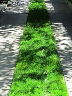 I just love the look and feel of these old-timey driveways with the grass strip.