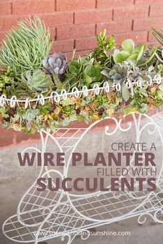 What better way to show off your stunning succulents than in a wire planter