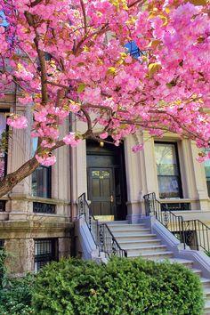 Springtime in Boston | New England Living