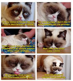 Tarder Sauce - aaawww poor kitty is just misunderstood!  Still want one.