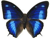 Butterfly Tattoo Designs, Pictures, Ideas, Design, Patterns, Photos,