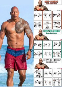 How To Create Monster Muscle Mass For Your Chest In Just 28 Days A bigger chest can ensure you fill out a suit. Strong pecs can also improve your back strength, as well as your ability to push things. Not only does a bigger chest look impressive — as well Gym Workout Chart, Gym Workout Tips, Fitness Workouts, Workout Videos, Workout Exercises, The Rock Workout, Bowflex Workout, Pyramid Workout, Exercise Schedule