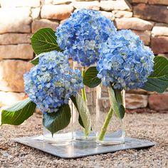 hydrangea floral arrangements in tall blue vase - Google Search