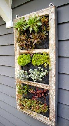 Hanging Succulent Garden. See More. Old Window Into Garden