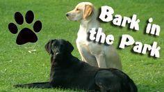 Bark in the Park tonight!! (4/18/12)
