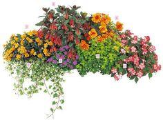 Balkon-Ideen: Balkonkästen bepflanzen dreimal anders - Strandcocktail mit Pflanzen in Rot, Orange und Violett