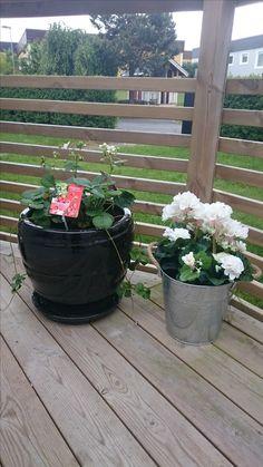 Planterat jordgubbar i den vänstra och platsblommor i den högra. Hinken från Ö&B 69 kr.