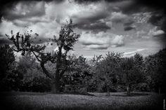 l'oeil noir series - le puits de cerise by Fred Thiele on 500px