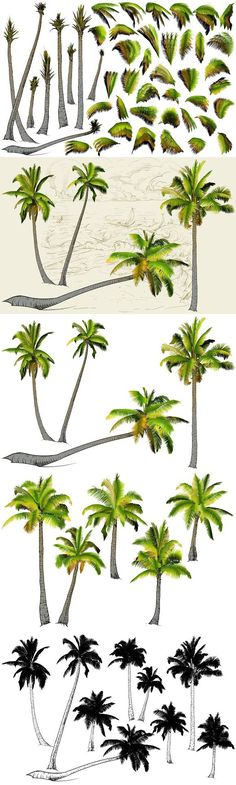 Palm tree collection (Vector). Objects. $10.00