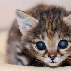 """** KITTEN: """" Dis be de hardest of allz - to  close one paw outz of love and keep modest az a giver."""""""