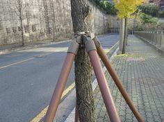나무 지지대 - Google 검색