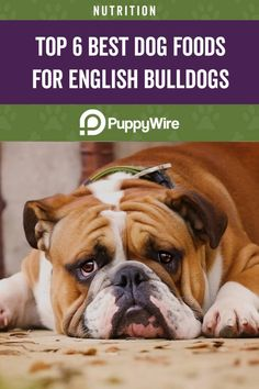Click through to see our top 6 picks for the best dog food for English Bulldogs. There are food choices for adults, seniors, puppies, and much more. Best Dog Food, Dry Dog Food, Best Dogs, English Bulldog Puppies, English Bulldogs, Hills Science Diet, Protein Rich Foods, Dog Diet, Natural Dog Food