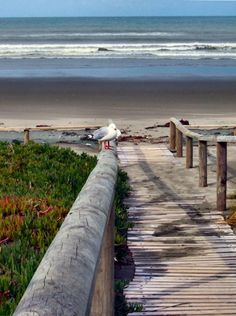 New Brighton beach, Christchurch, New Zealand New Zealand Beach, New Zealand South Island, New Zealand Travel, I Love The Beach, Beach Fun, New Brighton Beach, Christchurch New Zealand, Australia Travel, Wonders Of The World