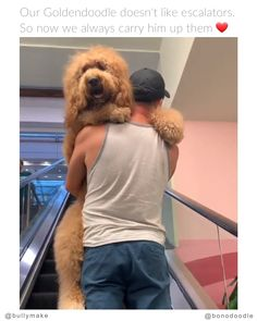 Animals Discover Dog Dad Carries Goldendoodle Up Escalator - Cute fluffy Animal - Memes Funny Animal Videos Cute Funny Animals Funny Animal Pictures Cute Baby Animals Animal Memes Funny Cute Funny Dogs Cute Puppies Cute Dogs Cute Funny Animals, Cute Baby Animals, Funny Cute, Funny Dogs, Cute Puppies, Cute Dogs, Cute Babies, Awesome Dogs, Cute Animal Videos