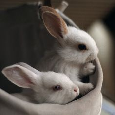 mama n baby I love baby animals. Literally I'm way too obsessed with baby animals. Very Cute Baby Animal Baby bunnies Baby Bunnies, Cute Bunny, White Bunnies, White Rabbits, Adorable Bunnies, Bunny Rabbits, Bunny Bunny, Snow Bunnies, Easter Bunny