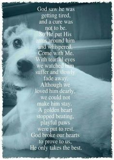 13 dog loss quotes comforting words when losing a friend paw love