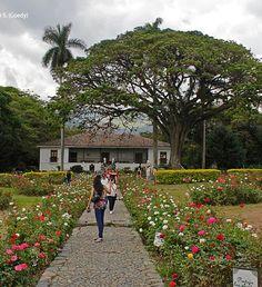 Hacienda El Paraíso, Valle del Cauca, Colombia