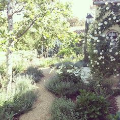 #lavender and #catmint overflow onto the pathway from the mudroom underneath the…