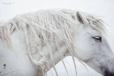 Bośnia - Siła spokoju - To najpiękniejsze zdjęcia koni, jakie kiedykolwiek zobaczycie [GALERIA]