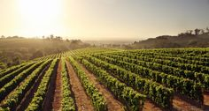 Constantia Glen is a boutique wine farm in Cape Town. We invite you to enjoy our wine, delicious food and unbeatable views. Order our wine online. Wine Online, Wine And Beer, Beer Lovers, Wine Tasting, Wines, Vineyard, Tours, Day, Cape Town
